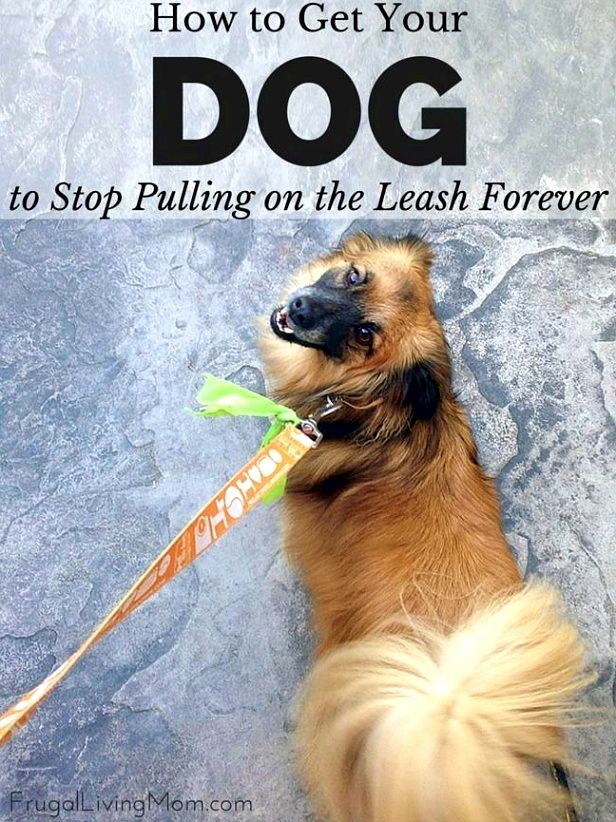 Dog training ideas, This article can assist you in on all