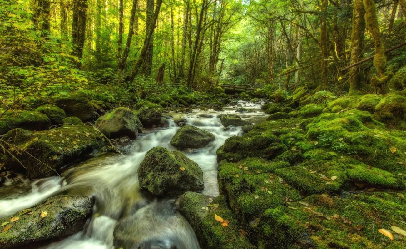 Forest 4k Quality Iphone Wallpaper: Download Nature Autumn Small River Forest Trees 2k 4k