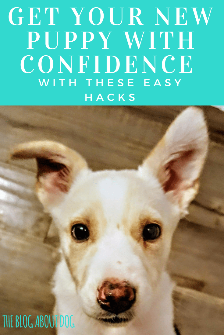 Get Your New Puppy With Confidence With These Easy Hacks New Puppy Dog Obedience Classes Puppies