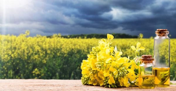 Plant Oils Are Not a Healthy Alternative to Saturated Fat - Nutrition Studies