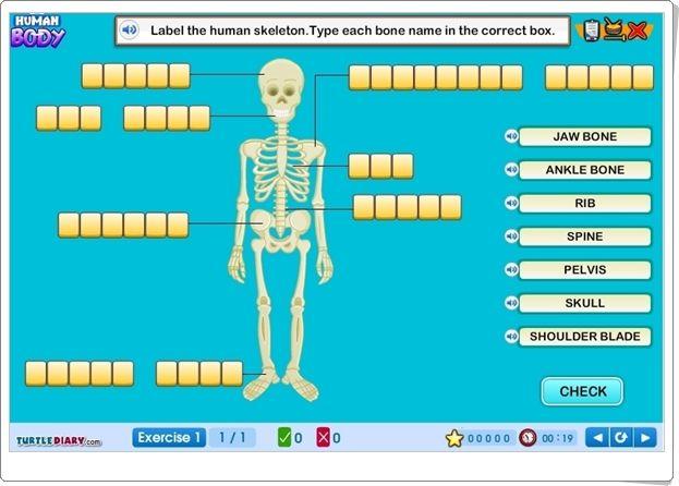 """""""Human Body"""" es un juego en inglés, de turtlediary.com, en el que, tras una exposición inicial ..."""