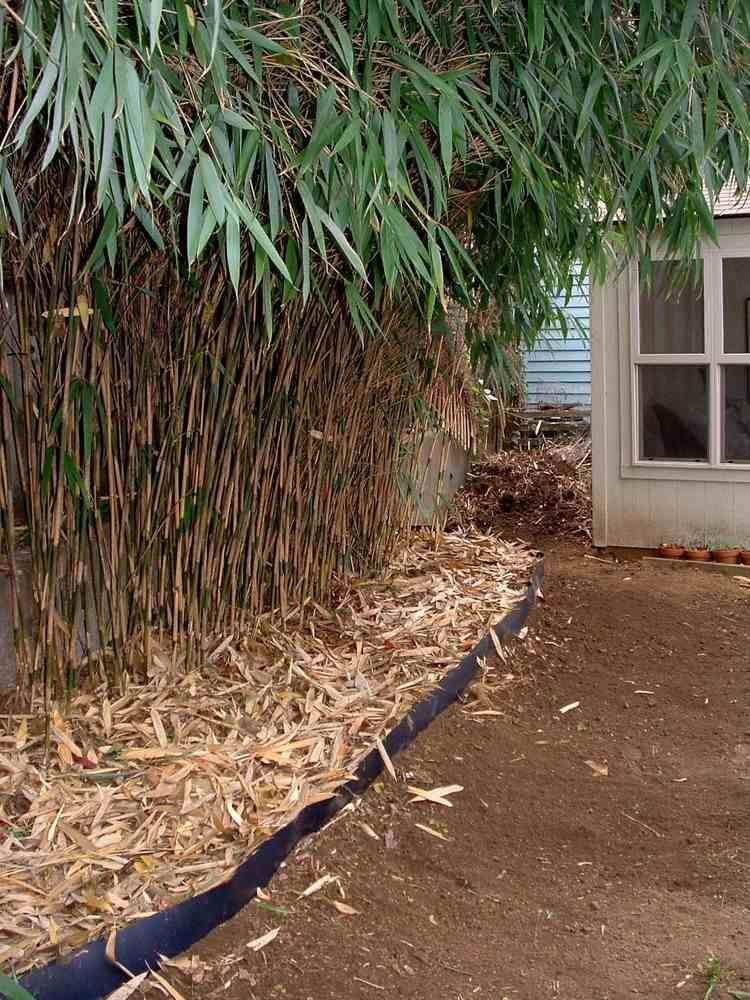 bambus im garten, bambus im garten mit rhizomsperre | haus & garten | pinterest | gardens, Design ideen