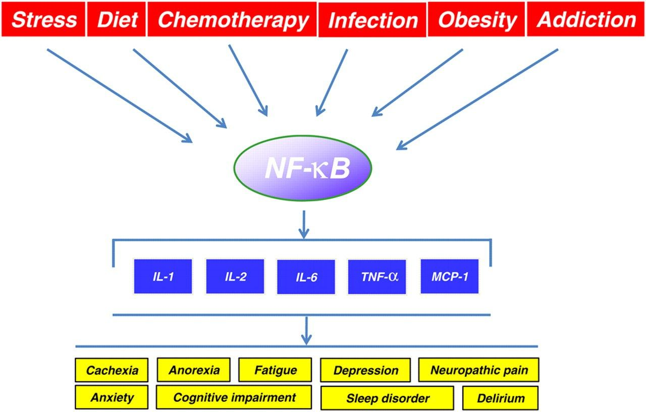 a study on nf kb and its relationship with inflamation and the alternative pathway It has been thought that there is a strong relationship between inflammation and   activation of the alternative nf-κb pathway and subsequent up-regulation of   the alternative pathway of nf-κb activation has been studied in recent years.