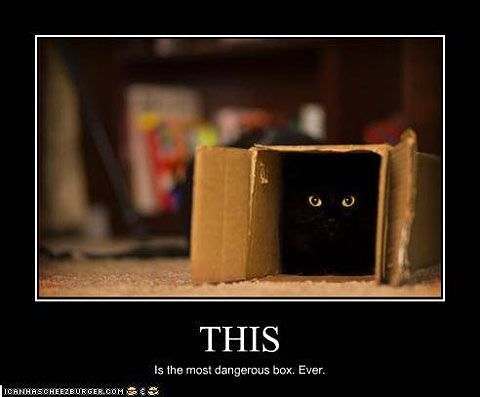 Black Cats Devious Feline Pinterest Funny Cats Cats And
