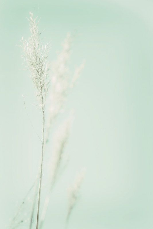 Aqua Pastel Minimalist Nature Home Decor Photography Print ...