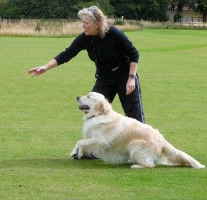 How to Training Your Dog: Beginning Agility Training For Dogs ~ petsrank.com Dogs Inspiration