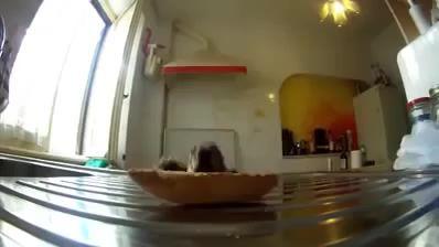 Wenn Herrchen nicht guckt » fressen, herrchen, hund, unbeobachtet » Trendhure.com