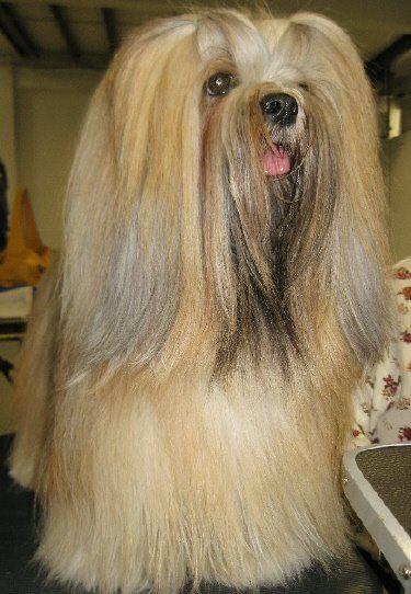 Ai como queria que Lola deixasse o pêlos assim.