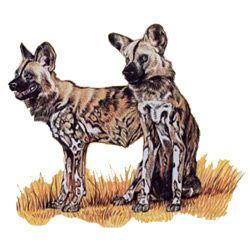 Гиеновая собака — зверь. Описание гиеновой собаки с картинками