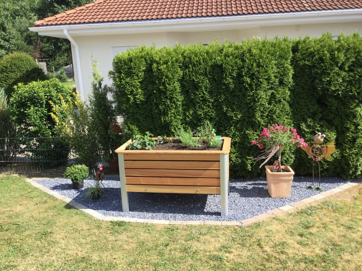 Rhabarber Pflanzen Pflegen Ernten Stachelbeeren Pflanzen Rhabarber Pflanzen