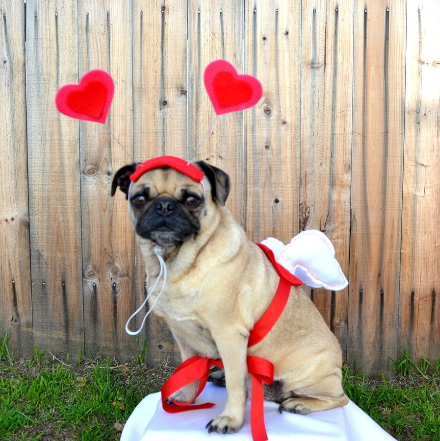 Valentine's Day CUPID & WINGS for dogs and cats | ilickyou