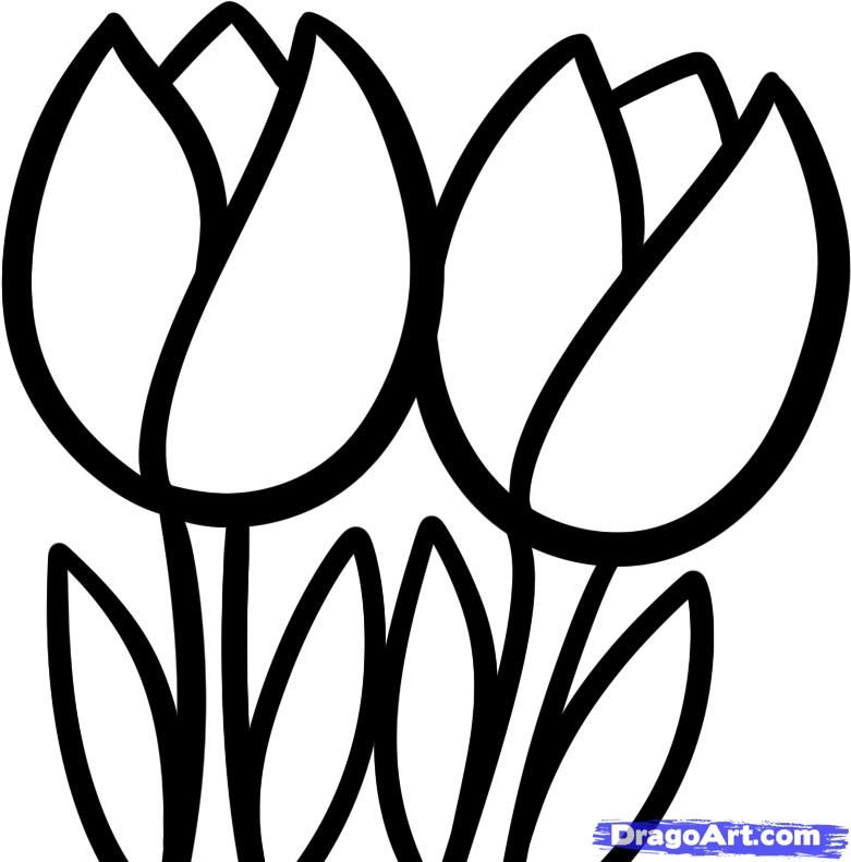 Drawing tulips | Art and designs | Pinterest | Drawings ...