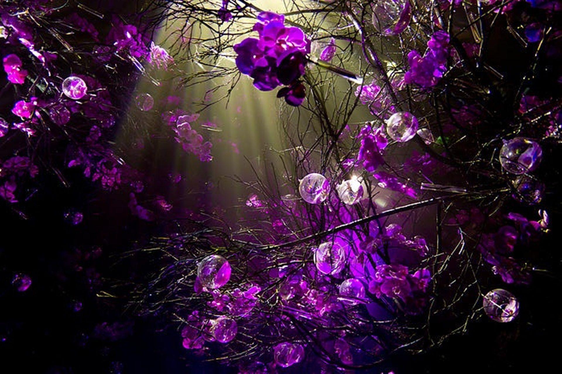 Pictures Cool Purple Desktop Backgrounds cute Wallpapers