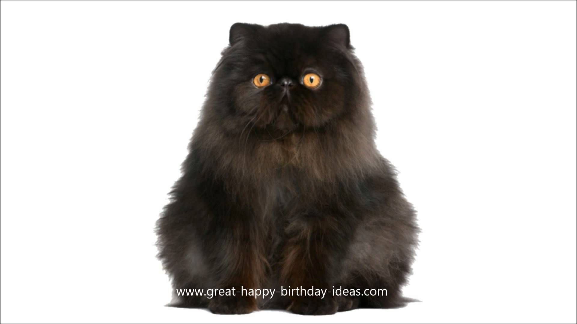 Black Cat Singing Happy Birthday