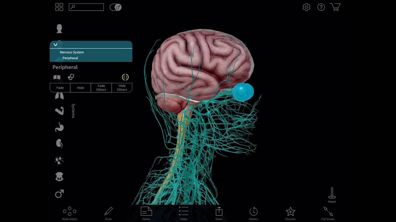 Virtual 3d Brain Dissection With Human Anatomy Atlas Visible Body
