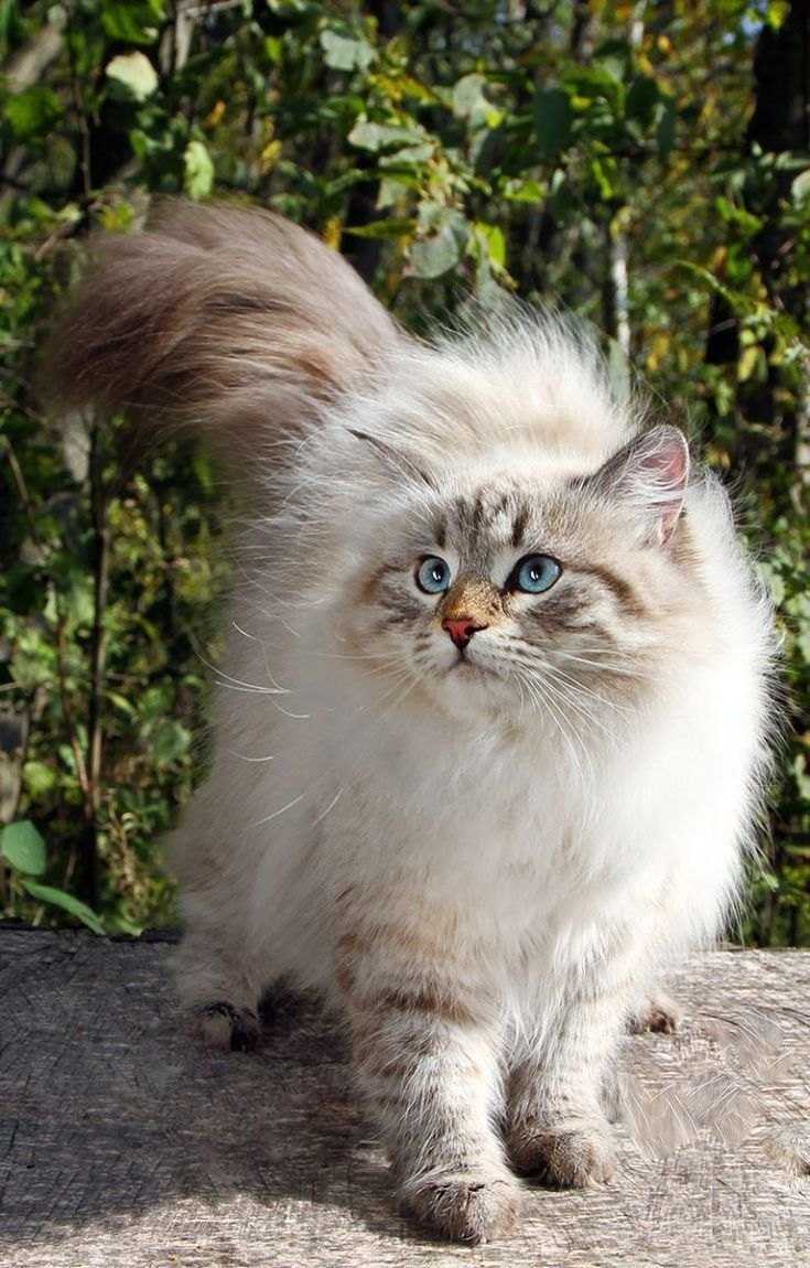 Littersolutionscat Spam Free Zone C Cool New Ways To Clean Cat Litter Siberian Cat Siberian Forest Cat Siberian Forest