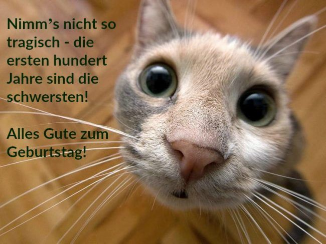 Geburtstagsspruche Lustig Mann Frau Katze Humor Alter Sack