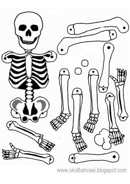 Iskelet Kaliplari Iskelet Boyama Sayfalari Erken Cocukluk