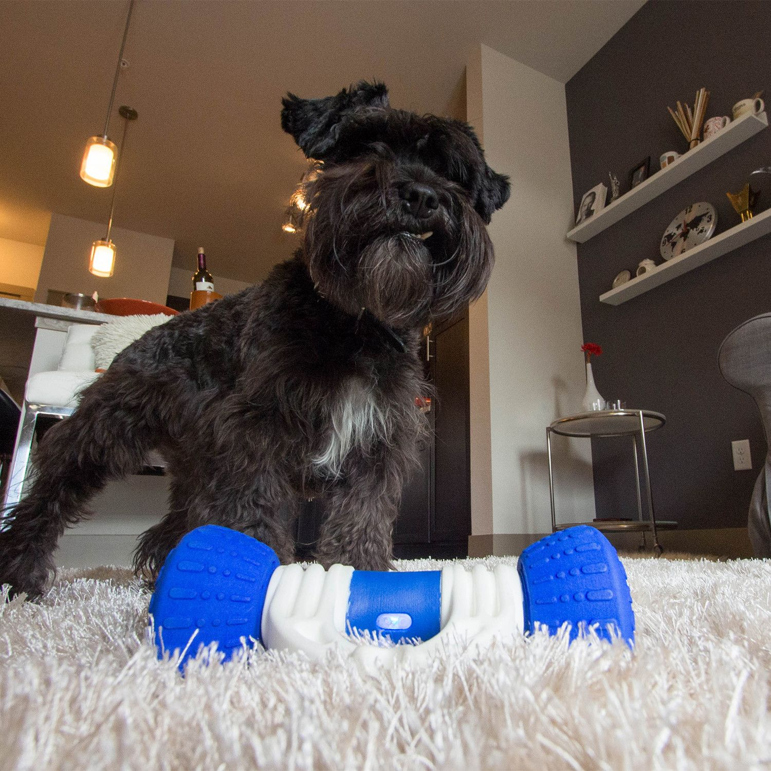 Interactive Dog Toys Exercise GoBone // Interactive Dog Toy
