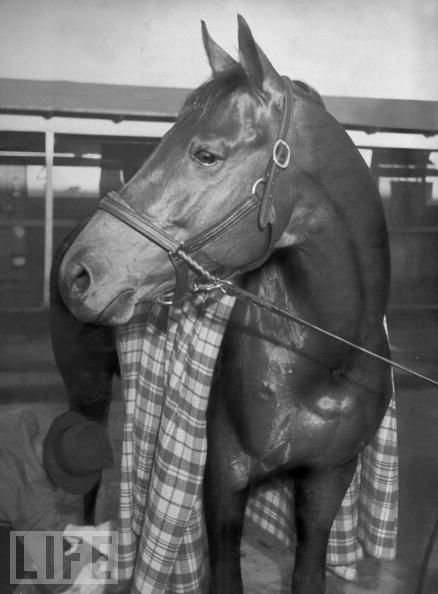 Wonderful photo of Seabiscuit after winning the 1940 Santa Anita Handicap!