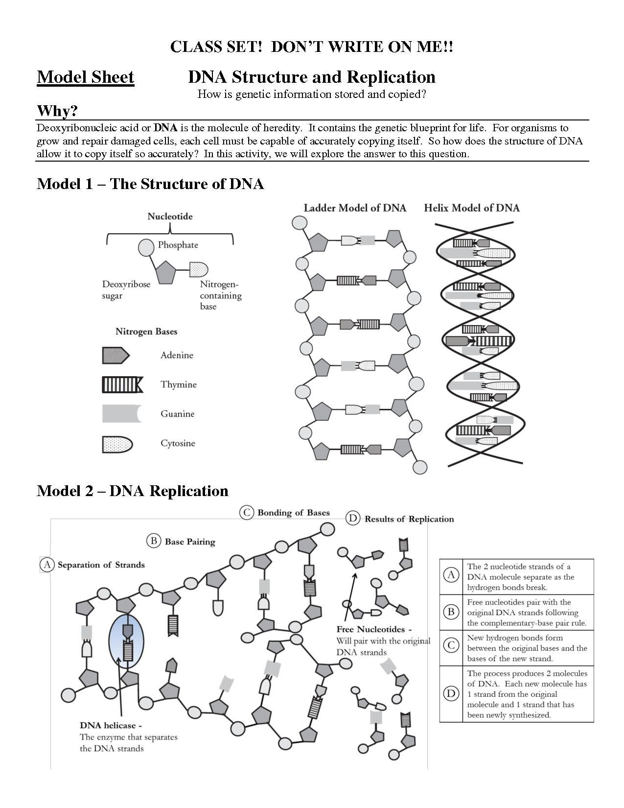 Inspirational Structure Of Dna and Replication Worksheet