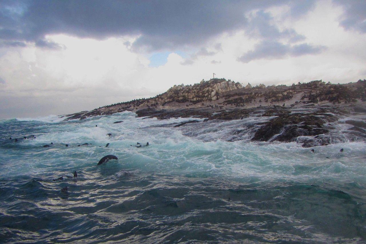 Seal Island - Sør-Afrika