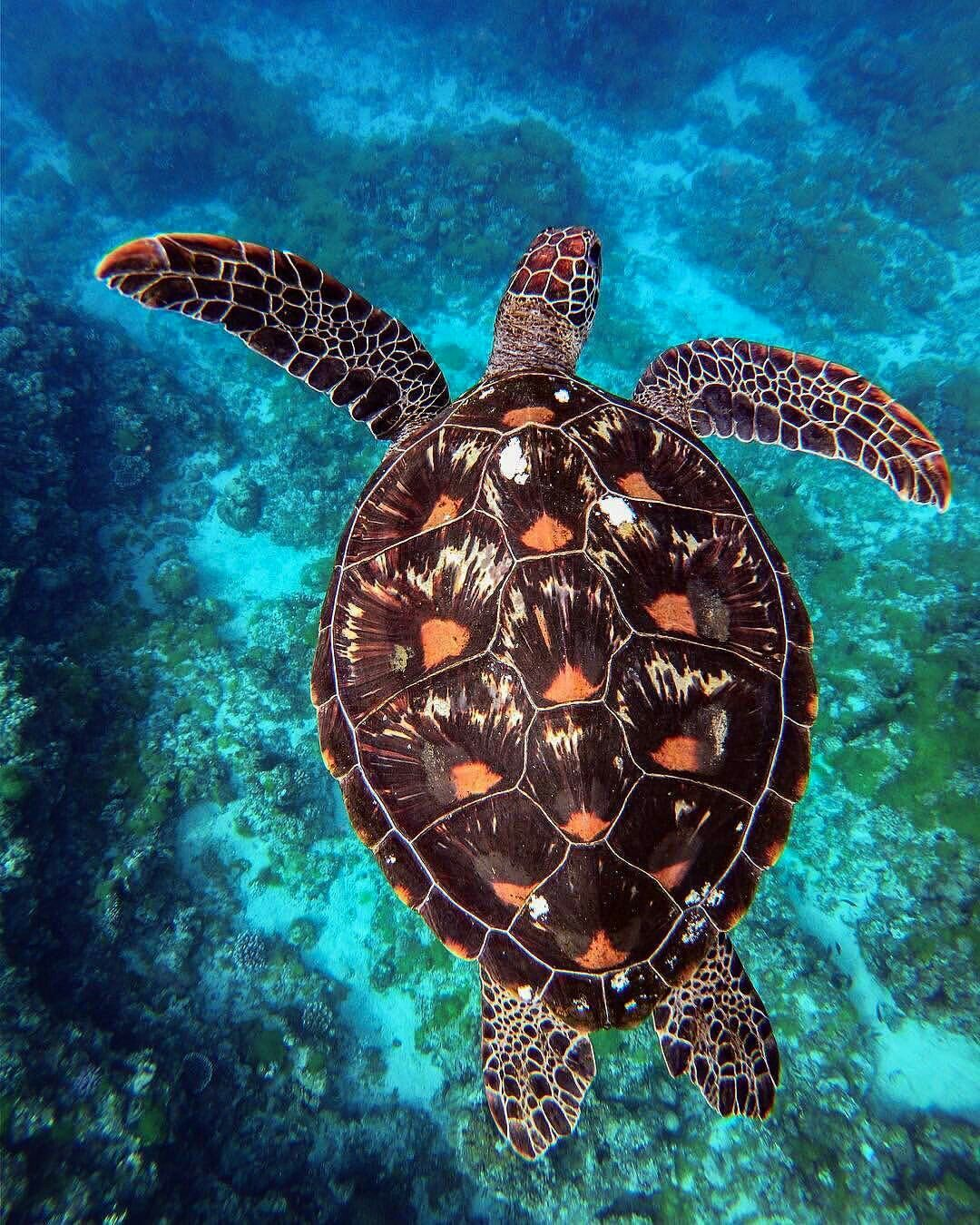 Sea Turtle lovely shell details | Tortugas marinas, Animales ...