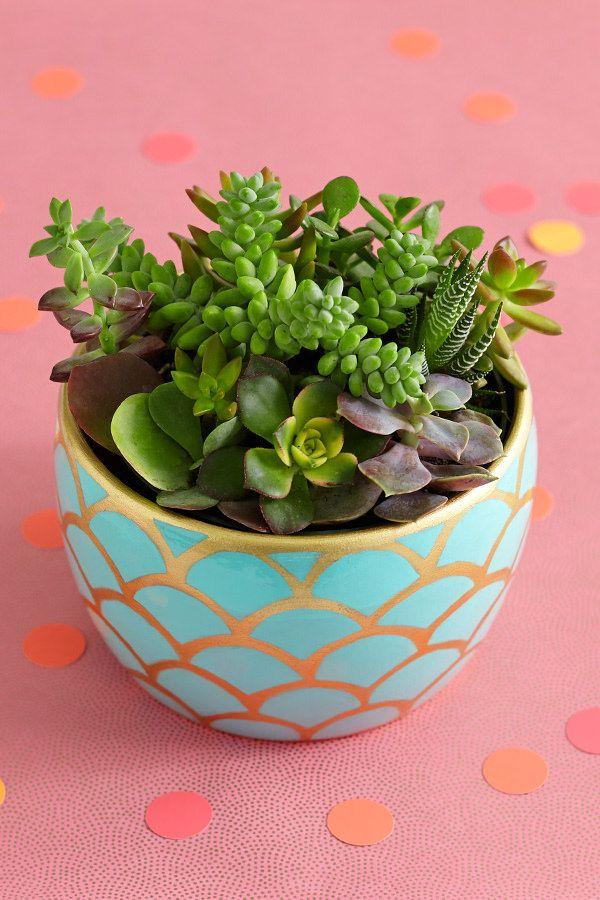 Más tamaños   succulent garden potted plant on table in gold scalloped container   Flickr: ¡Intercambio de fotos!