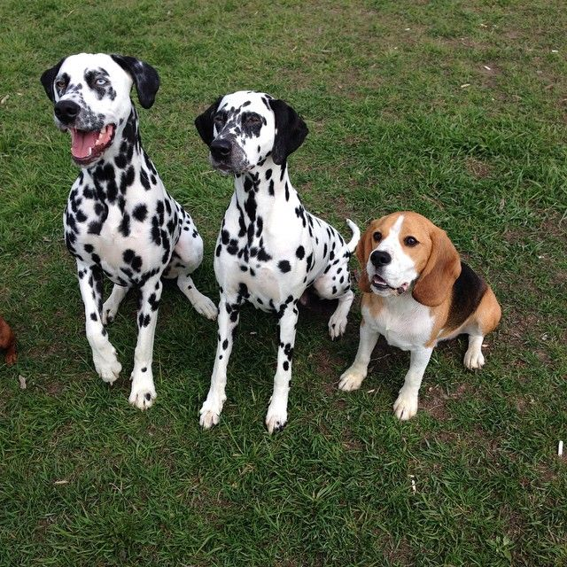 I love my spotted friends Abbe and Hedvig❤️