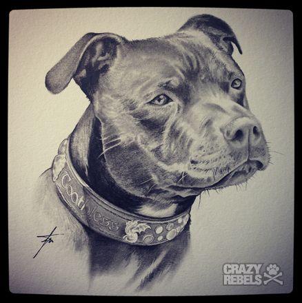 Giveaway Winner Toothless Crazyrebelsportraits Handdrawn Illustration Amstaff Staffy Americanstaffordshireterrier Pitbull Art Dog Portraits Dog Art