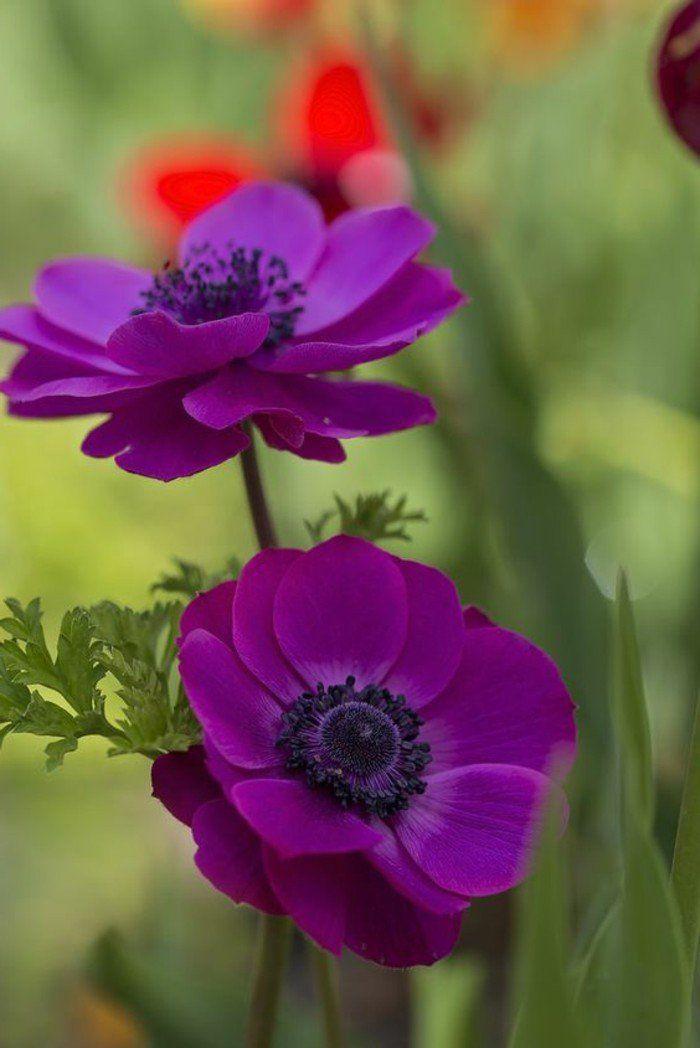 les plus belles fleurs violettes en beaucoup d 39 images. Black Bedroom Furniture Sets. Home Design Ideas