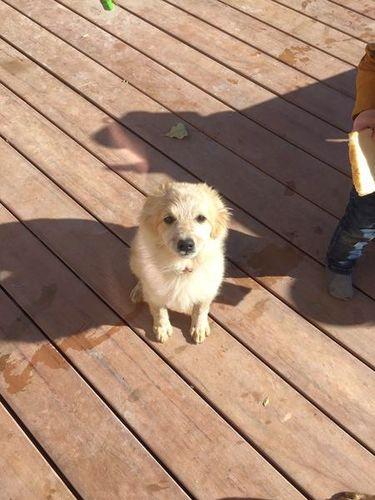 Puppy!! Puppies, Free puppies, Salt lake city ut