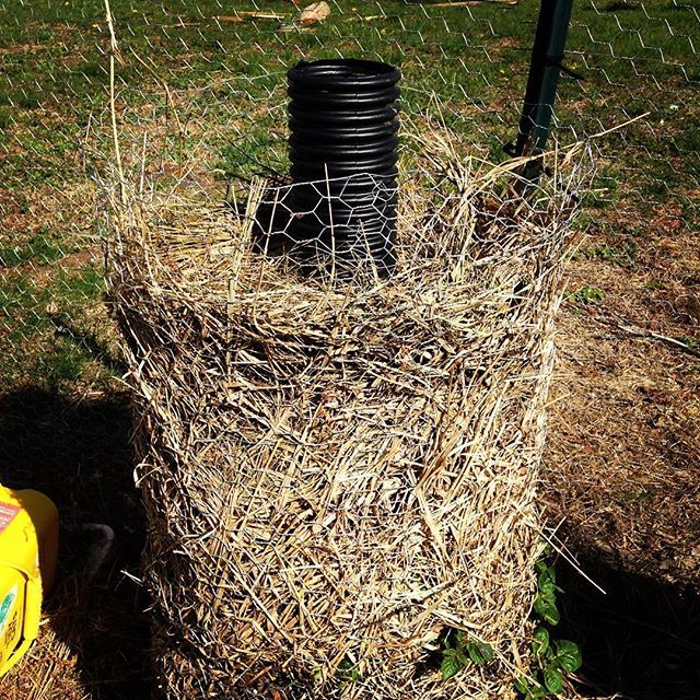It's Saturday morning and the garden is calling!  We wised up this year and built a potato tower with a perforated drain pipe to allow for watering to the bottom.