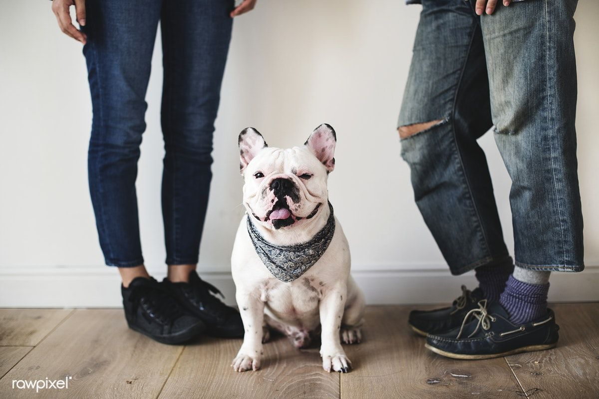 Download Premium Photo Of Asian Couple With French Bulldog 385683