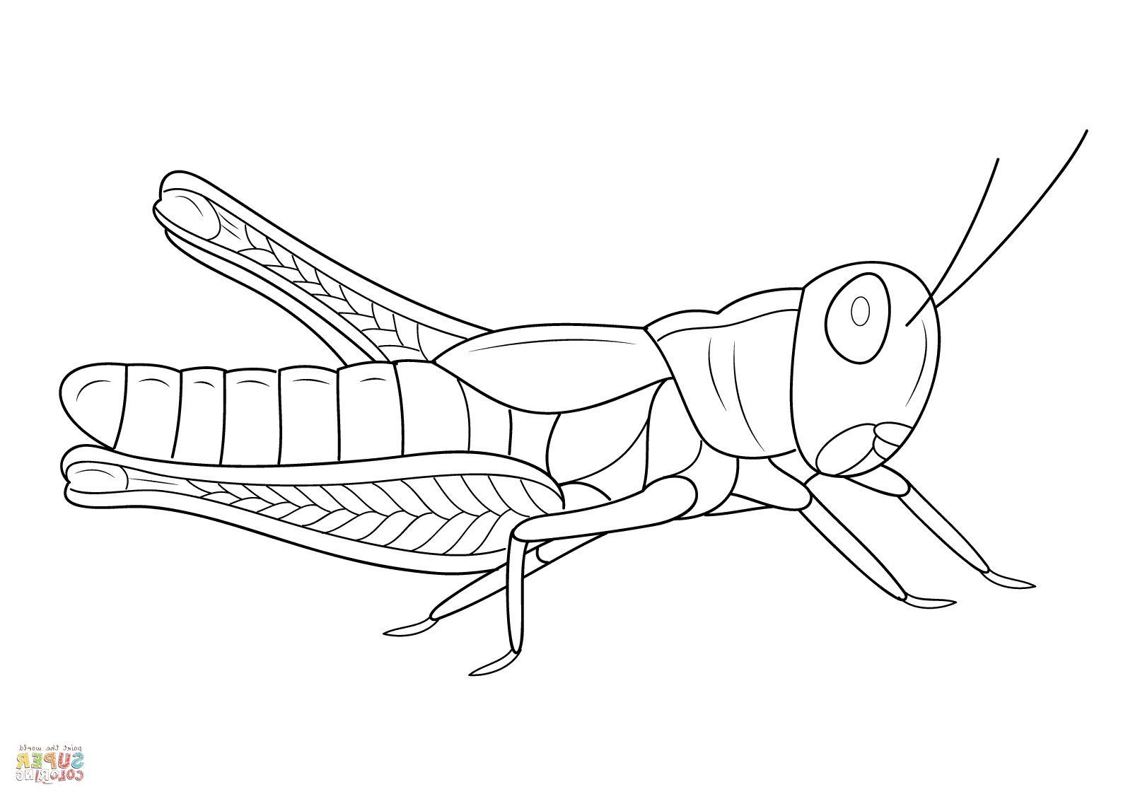Grasshopper Coloring Page Hayvanlar