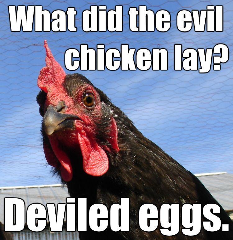 Don't be a cock blocker funny rooster joke