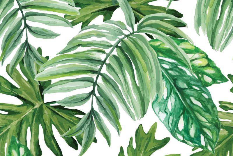 Watercolour Green Eucalyptus Banner On White Background