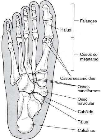 Huesos del pie   Anatomia   Pinterest   Huesos, Anatomía y Medicina