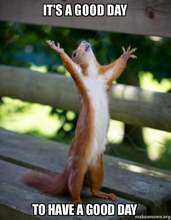 30 Have A Good Day Memes That Will Cheer You Up Sayingimages Com Happy Squirrel Cute Animals Funny Animals