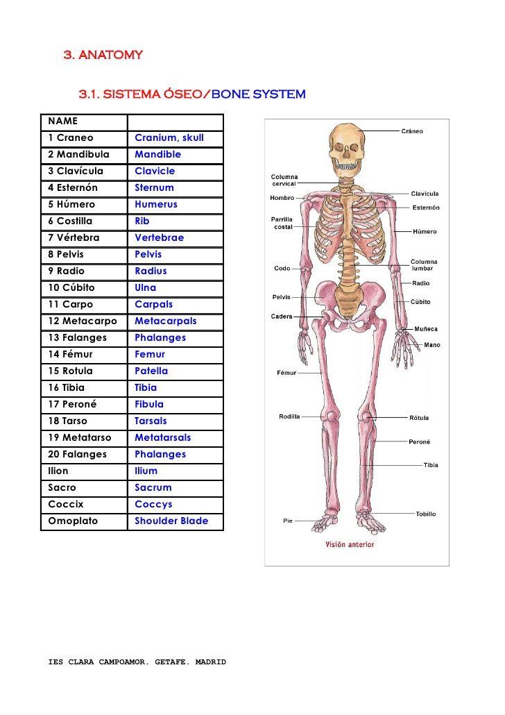 vocabulario-terminologa-y-anatomia-ingls-3-728.jpg (728×1030 ...