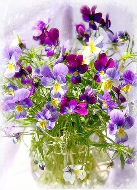 картинки с днем рождения с цветами анютины глазки