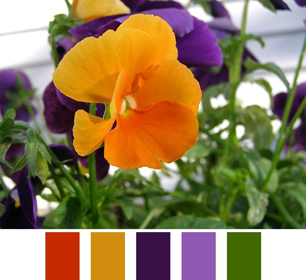 Orange Green Purple Room: Purple Color Palettes