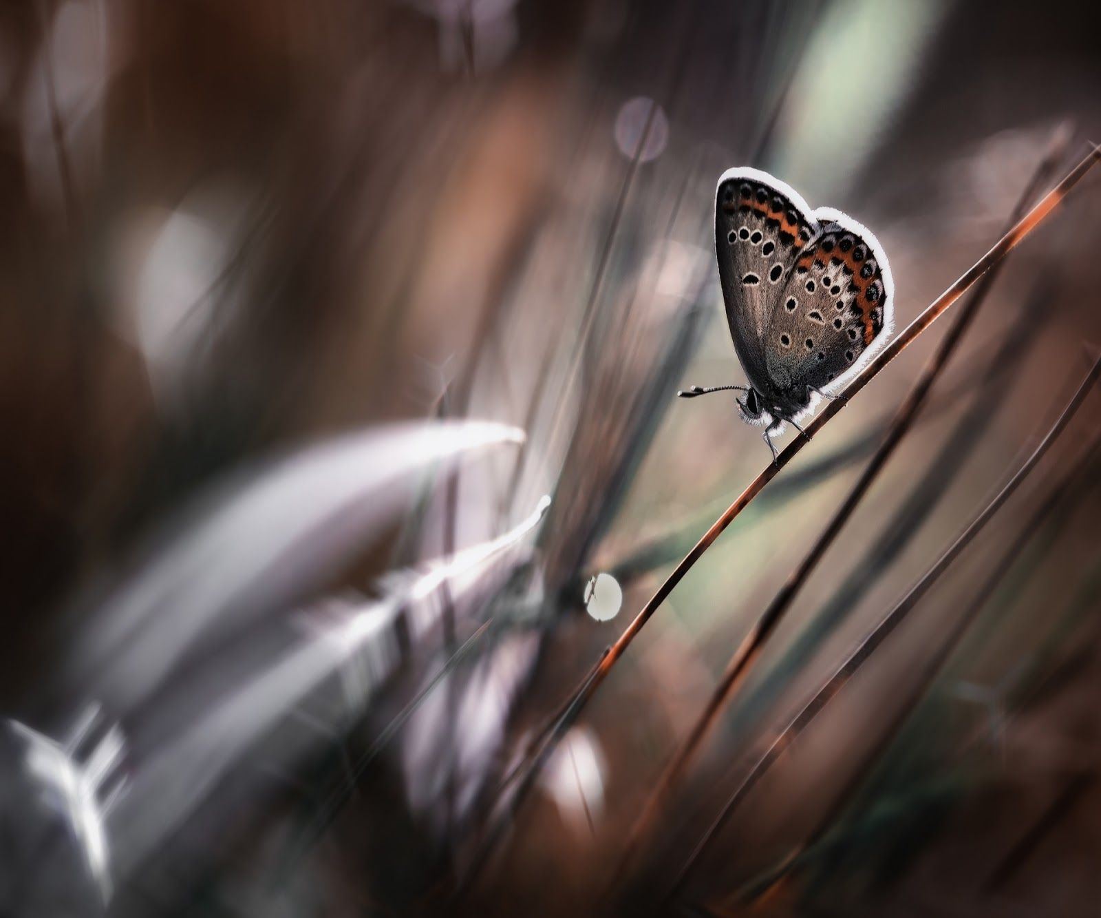 Wallpapers Samsung Galaxy Tablet 10 1 Hearts Butterfly Bokeh Insects