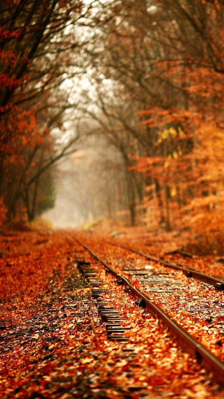Autumun Railway Iphone Wallpaper Check More At Http Iphoneswallpapers Com Autumun Railway Iphone Wallpaper Paysage Automne Fond D Automne Paysage