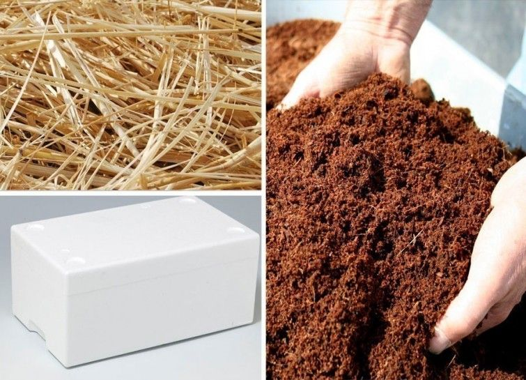 Cómo cultivar champiñones en el hogar