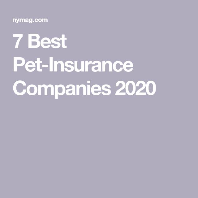 Figo Pet Insurance Review Is It The Best Value Pet Insurance