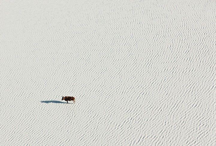 Stunning Aerial Photos of Botswana Wildlife - My Modern Metropolis