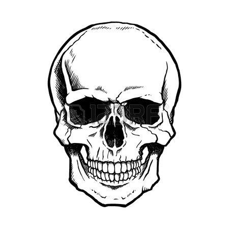 Schwarzweiss-menschlicher Schädel mit einem Unterkiefer.