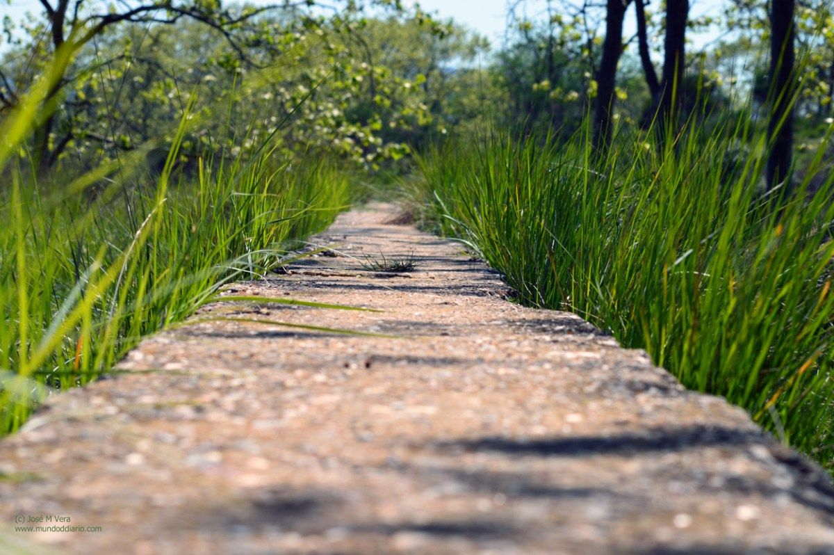 Camino cemento