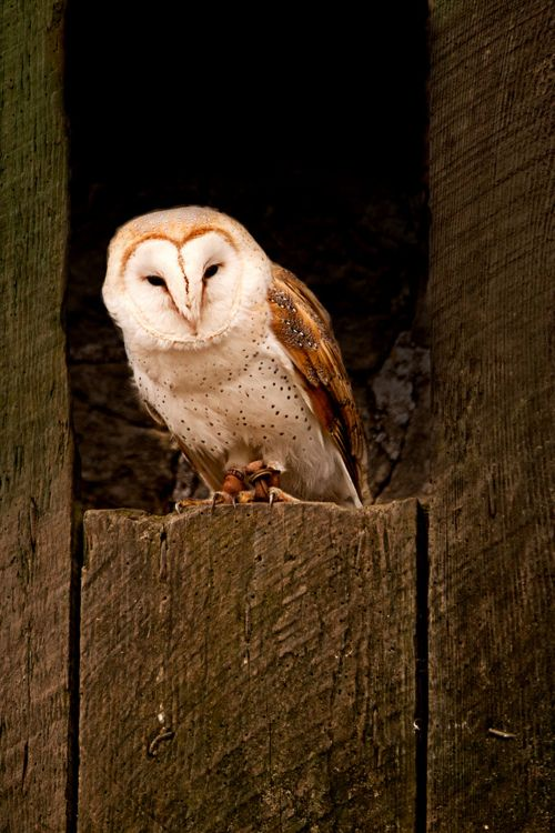 Love This One If You Provide Them With A Nest Be It A Barn Or An